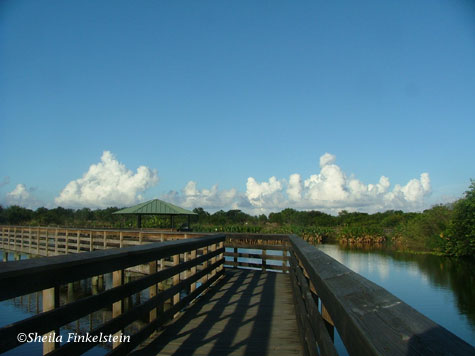 puffy white clouds beyond the boardwalk at Wakodahatchee Wetlands