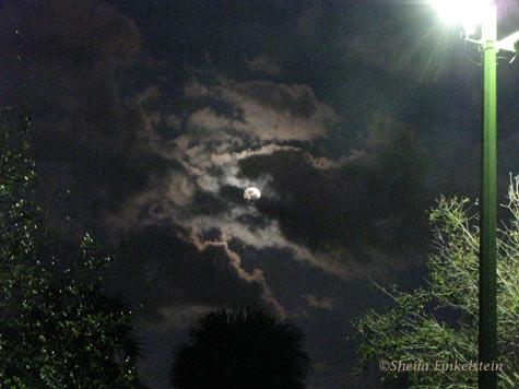 Lamplight and Moonlight